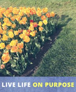 live-life-on-purpose