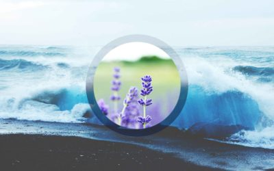 002 – Lavender Medicine Story + Discernment Practice + Space Clearing in NYC